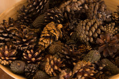 Background of dried natural pine cones Stock Photo