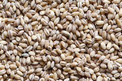Background of dried pearl barley. Royalty Free Stock Image