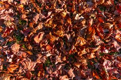 Dried Colorful Autumn Leaves on the Ground stock images
