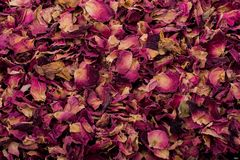 Background of dried rose petals. As herbal tea royalty free stock photo