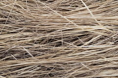 Background the dried-up grass Royalty Free Stock Photos