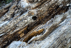 Background driftwood features Royalty Free Stock Photos
