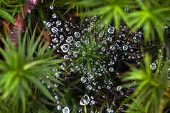 Background of the drops of dew on a spider web Stock Photography