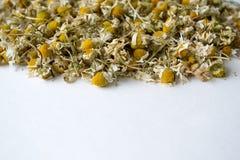 Background of dry chamomile. Matricaria chamomilla. Dry chamomile of white background. Matricaria chamomilla. Macro photo photography royalty free stock photography