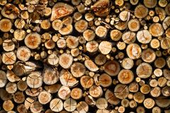 Background of dry chopped firewood logs Stock Images