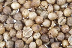 Dry coriander seeds. Background with dry coriander seeds Royalty Free Stock Photo