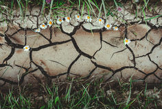 Background with dry crack ground with flowers and green grass Royalty Free Stock Photos