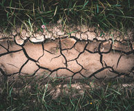 Background with dry crack ground with green grass Royalty Free Stock Photo