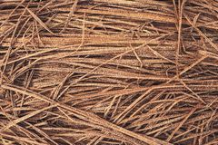 Background of dry frozen grass stock photos