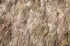 Background of dry grass on the slope in early spring. Backgrounds royalty free stock photos