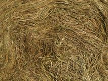 Background of dry grass. South Bohemia stock image