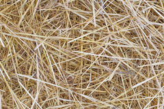 Background of dry grass. Background of dry yellow grass stock image