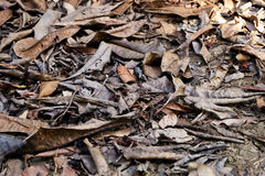 Background of Dry Leaves, Dead Leaf on The Ground. Great For Any Use Royalty Free Stock Photo