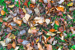 Background from dry leaves and grass Royalty Free Stock Photography