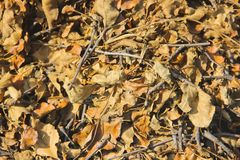 Background from dry leaves. Tree branches stock image