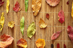 Background dry multicolors leaves. On a wooden background Stock Photos