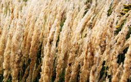 Background of dry plants Stock Photos