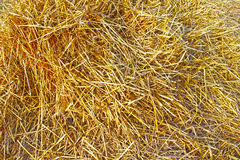 Background of dry rye straw Royalty Free Stock Image