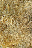 Background of dry rye straw Royalty Free Stock Photography