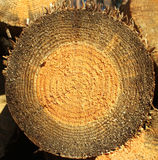 Background of dry sawn pine logs Royalty Free Stock Image