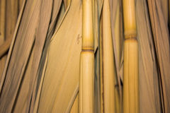Background of dry stems Royalty Free Stock Photography