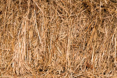 Background of dry straw Stock Photos