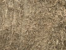Background of dry straw. Texture hay closeup in color. Fodder for livestock and construction material.  stock images