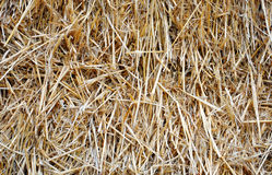 Background with dry straw Stock Image