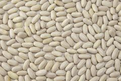 Background of dry white beans royalty free stock photography