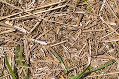 Background dry withered grass Stock Photography