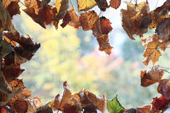 Background with dry yellow leaves Stock Photos
