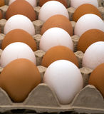 Background from eggs. Royalty Free Stock Photo