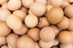 background eggs shot studio Стоковые Фото