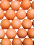 background eggs shot studio Стоковые Фотографии RF