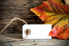 Background with Empty Label and Autumnal Decoration Stock Photo