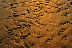 Erosion patterns in wet sand in the evening sunlight stock photos