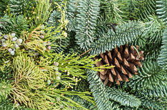 Background of evergreens for decoration Royalty Free Stock Photos