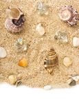 Background with exotic shell Stock Image
