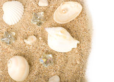 Background with exotic shell Stock Photos