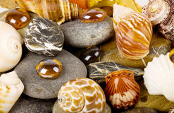 Background with exotic stones and shell Royalty Free Stock Photo