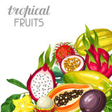 Background with exotic tropical fruits. Illustration of asian plants Royalty Free Stock Photo