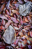 Background of fall dead leaves Stock Images