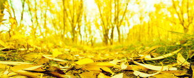 background of fall forest Stock Images