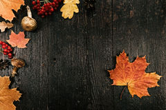 Background with fall leaves Stock Photography