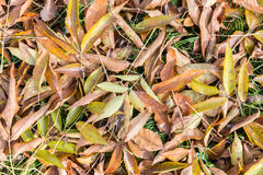 Background of fall  leaves Royalty Free Stock Photo