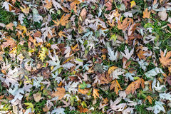 Background of fall  leaves Stock Photography