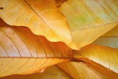 Background With Fall Yellow Leaves Royalty Free Stock Photo