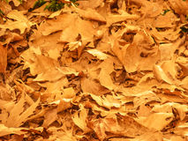 Background of Fallen Autumn Leaves Stock Photography