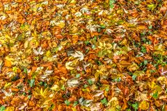 Background of fallen colorful autumnal leaves. On the ground royalty free stock photo