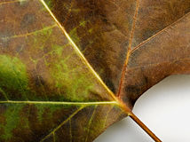 Background from fallen leaf Royalty Free Stock Photos